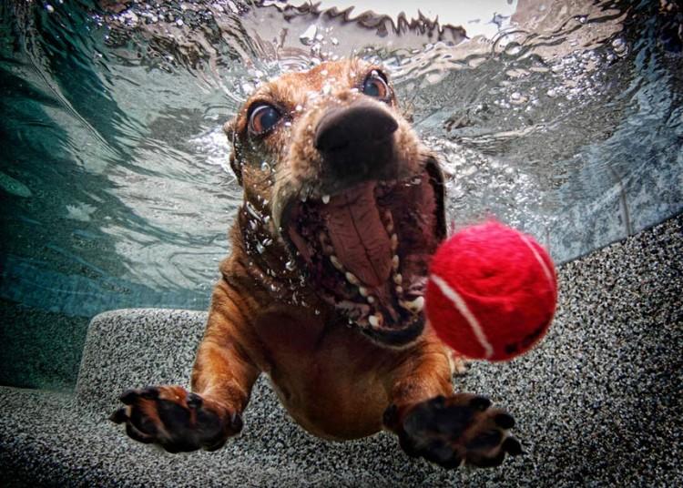 underwater-dog-2jpg