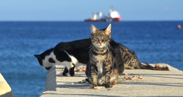 ostrvo mačaka