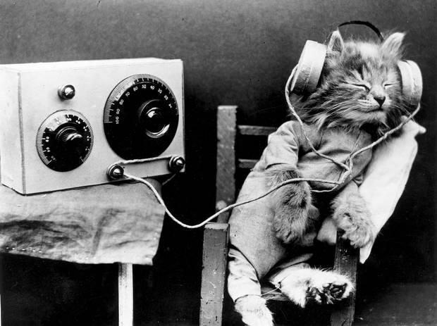 muzika za mačke