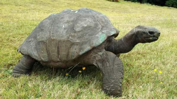 najstarija kornjaca