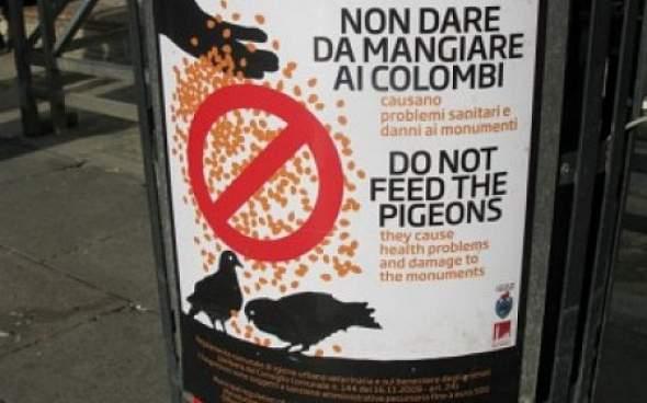 golubovi znak