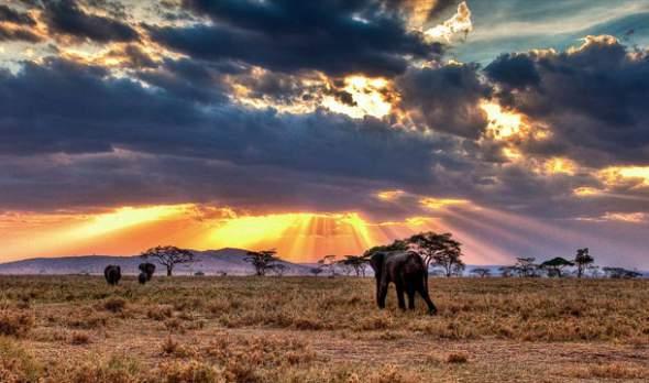 serengeti oblast inspiracija kralj lavova