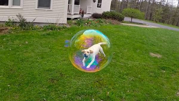 pas u balonu