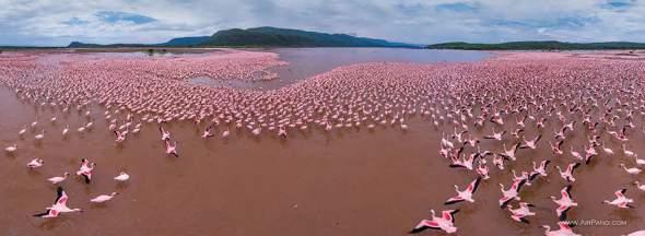 flamingosi1