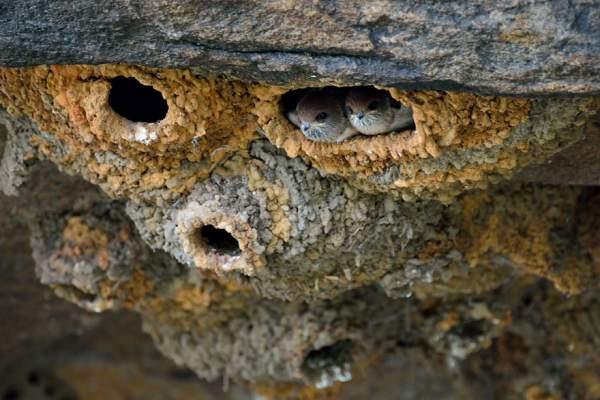 lastavičje gnezdo