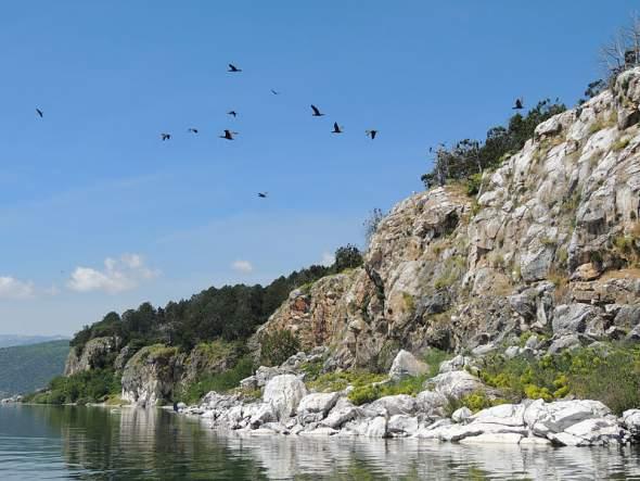 kolonija kormorana