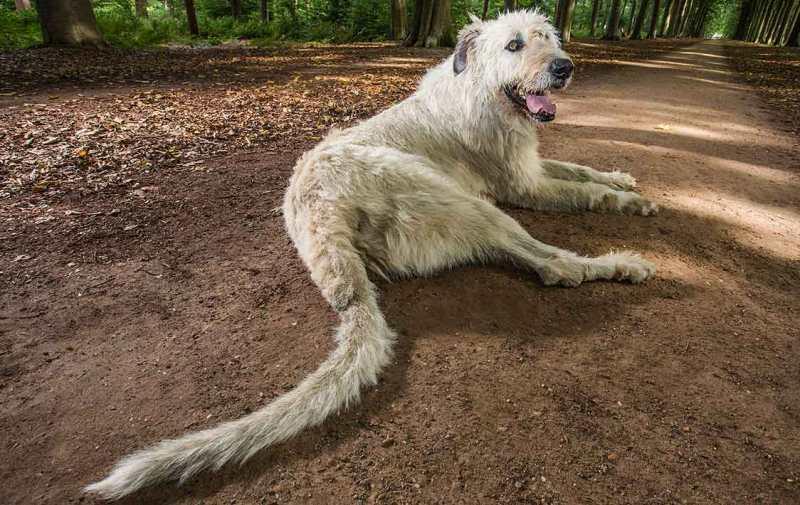 pas sa najdužim repom