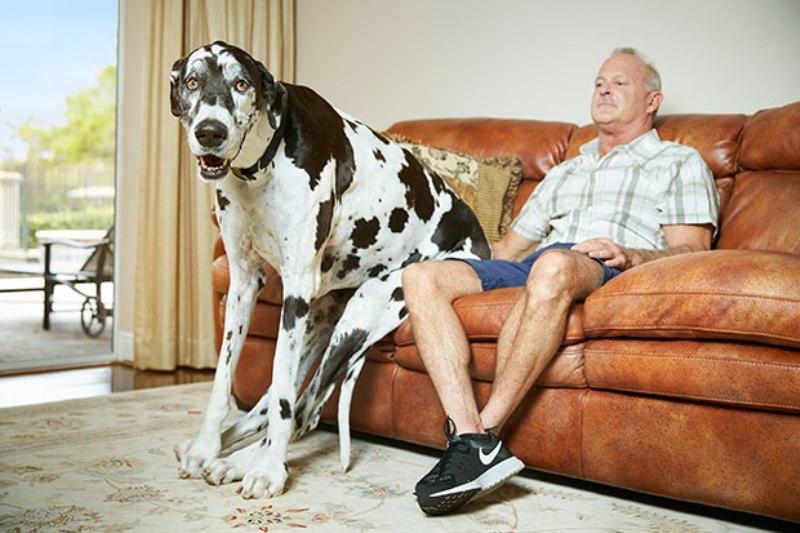 najveća ženka psa