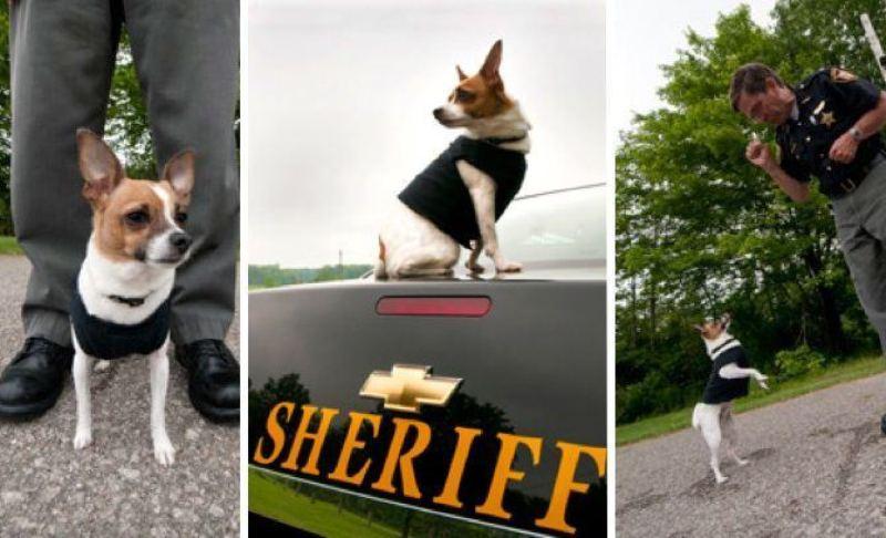najmanji policijski pas na svetu