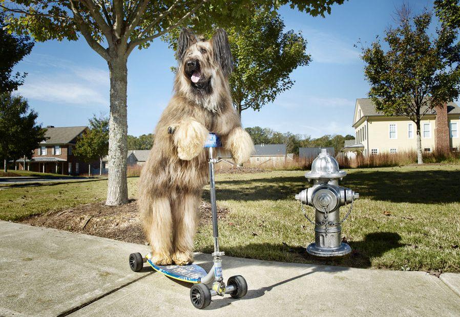 psi ginisovi rekorderi